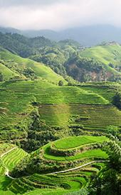 The Dragon's Backbone Rice Terraces in Longshen